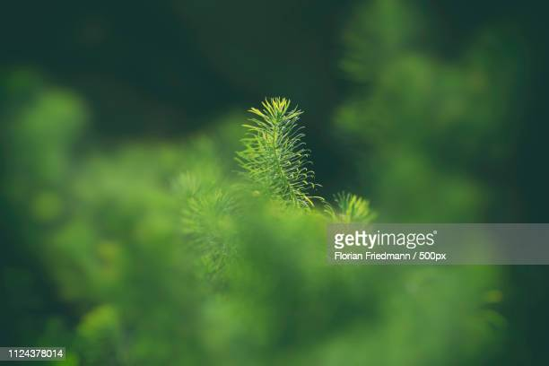 one in the middle - nature stock pictures, royalty-free photos & images