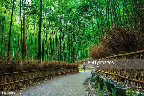 One Japanese female standing in winding footpath in bamboo forest, Kyoto, Japan