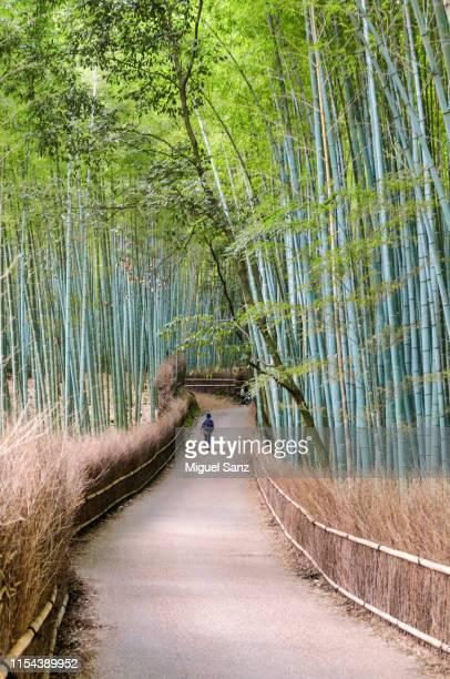 one japanese walking in in arashiyama bamboo forest - arashiyama stock pictures, royalty-free photos & images