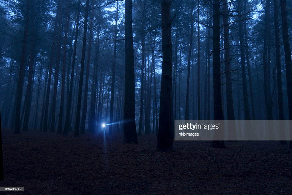 One light in the dark spooky woods at night : Stock Photo