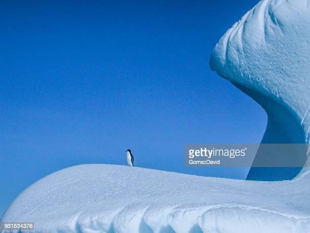 Un solitario salvaje Pygoscelis adeliae en Iceberg