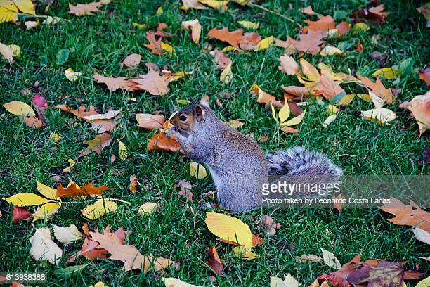 One more squirrel