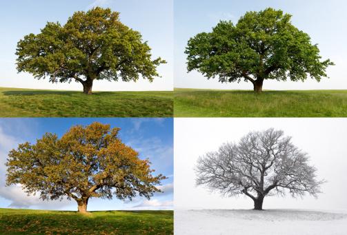One Oak - Four Seasons 157198810