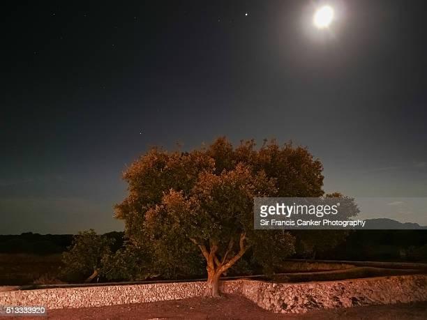 One oak tree illuminated by moonlight at night, Spain