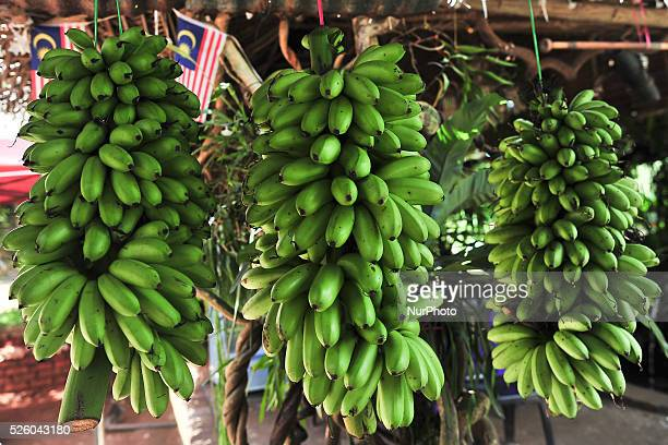 One of many small road side shops with bananas for sale all along the fourth stage of the Tour de Langkawi 2016 the 1294 km from Ipoh to Cameron...
