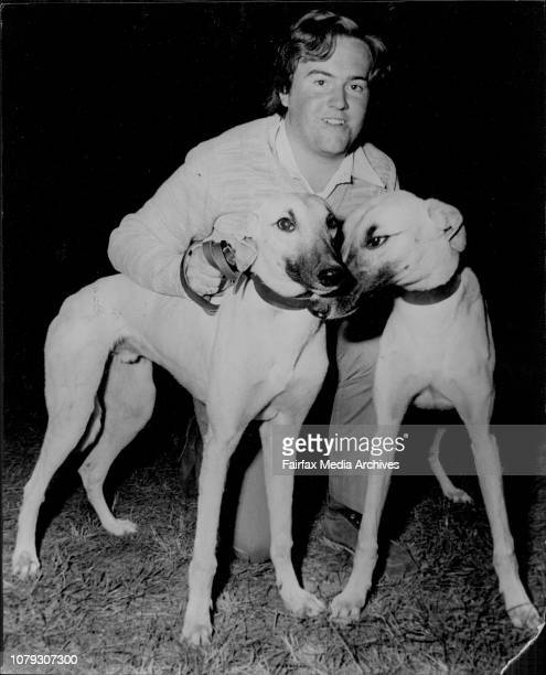 One of our Sun Superdog winners Terry Chalmers 18 of Newtown with the 9 month old fawn dogs at the Phillips Greyhound Lodge Schofields May 23 1973