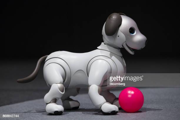 One of Sony Corp's new robotic dogs which the company is marketing as 'aibo' instead of the prior 'AIBO' is arranged for a photograph on stage during...