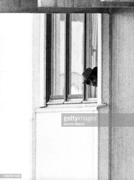 One of the five Arabian terrorists with sunglasses and hat looks out of a window of the Israeli team accommodation in the Olympic village in Munich...