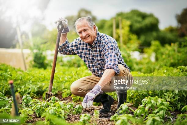 one of the healthiest hobbies to have - gardening stock pictures, royalty-free photos & images