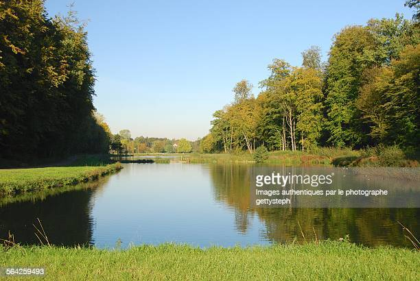 one of the ponds in wooded area - bonne posture photos et images de collection