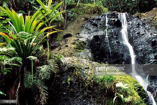 One of the Waisila waterfalls between ferns and mosses ColoISuva Forest Park Viti Levu Island Fiji Islands