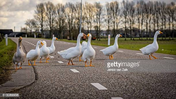 One of them is the crossing patrol