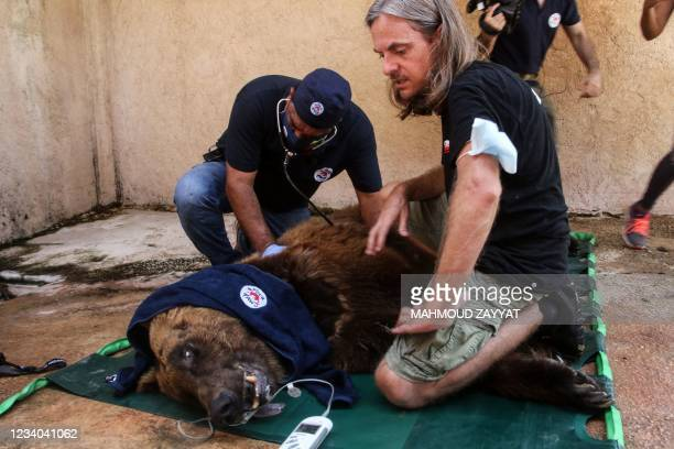 One of two Syrian brown bears is sedated and examined before being transferred to the United States by members of the global animal welfare...