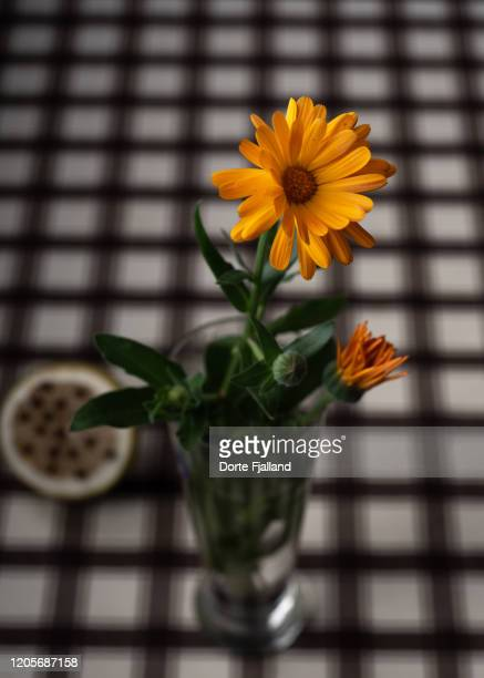 one orange calendula in a glass vase on a table with a brown checked tablecloth - dorte fjalland stock pictures, royalty-free photos & images