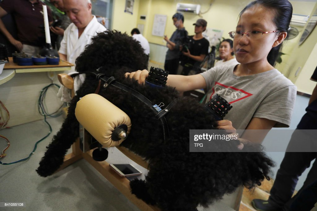 One pet hospital in Shanghai treat pets by traditional Chinese acupuncture and smoke wormwood on 30th August, 2017 in Shanghai, China.