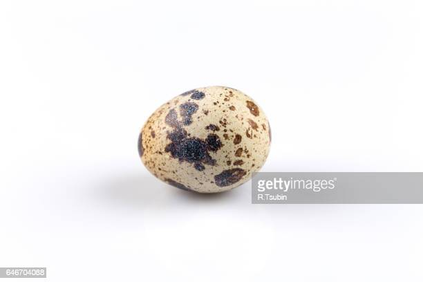 one quail egg - quail bird stock photos and pictures