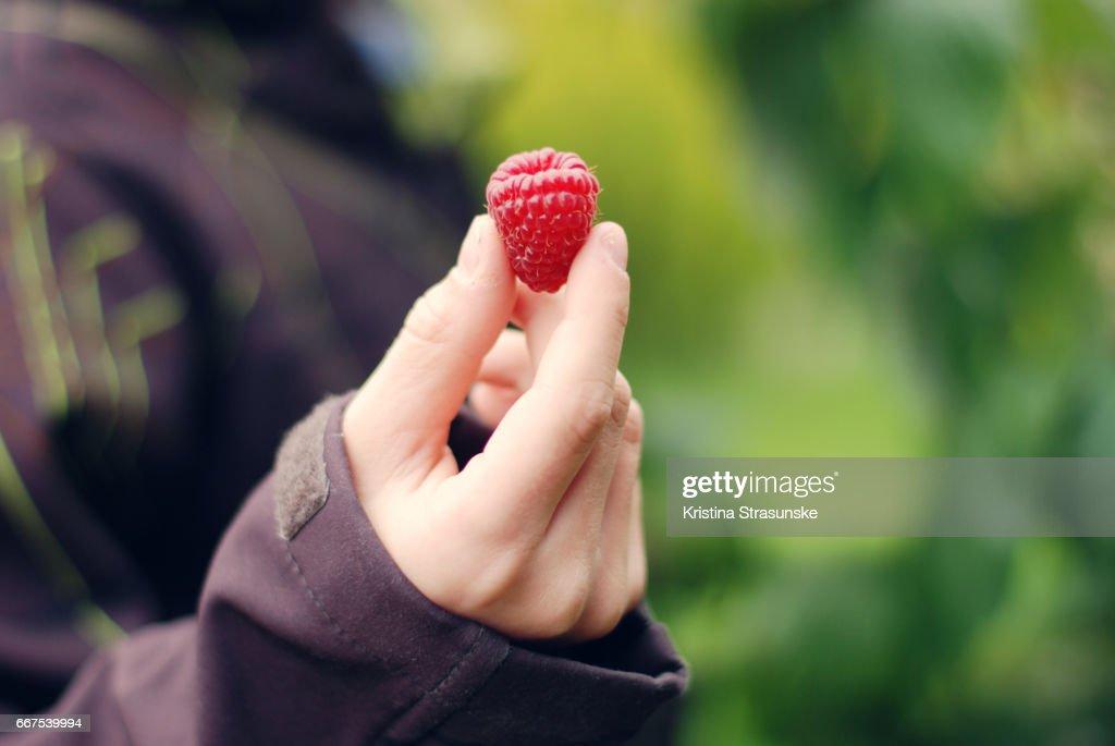 one raspberry : Stock Photo