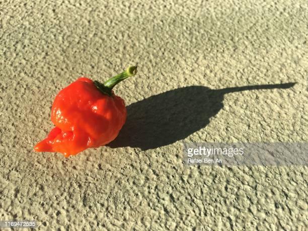 one red habanero hot chili pepper - rafael ben ari foto e immagini stock