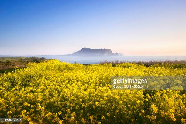 one spring day, in 'jeju - jeju island stock pictures, royalty-free photos & images