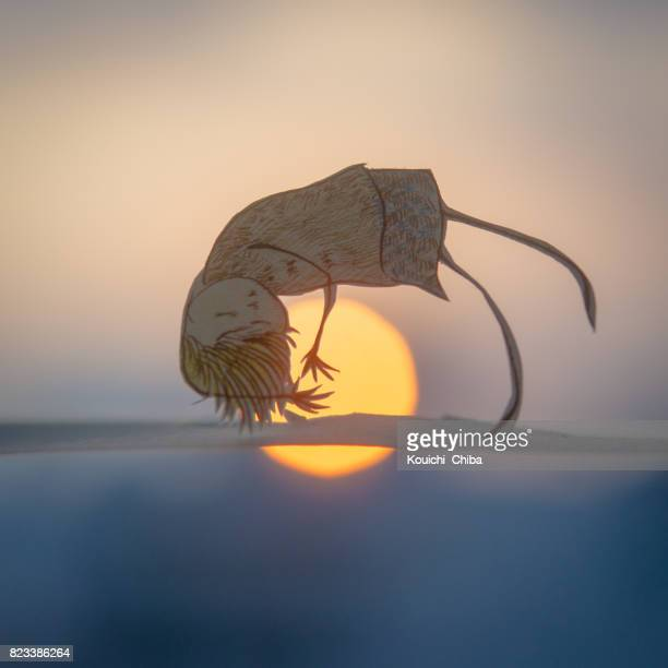 one sunset - kouichi chiba stock photos and pictures