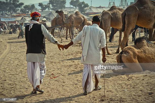 CONTENT] One trader leads another by the hand at the Pushkar Mela as they jointly examine camels on sale The Pushkar Mela is an annual camel and...