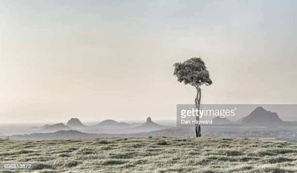 one tree mist - glass house mountains stock pictures, royalty-free photos & images