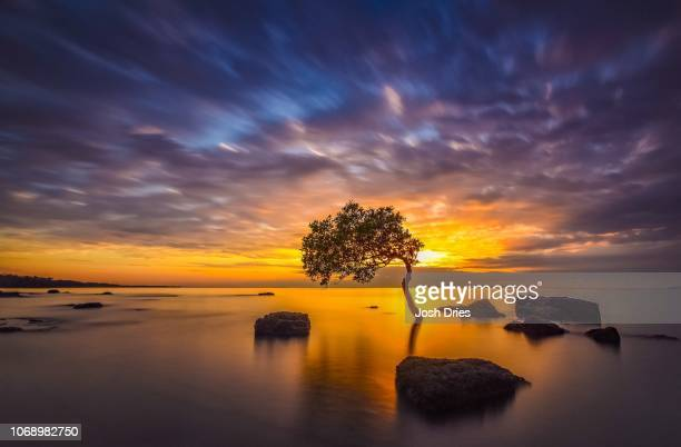 one tree ocean - darwin australia stock pictures, royalty-free photos & images