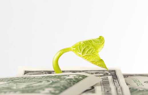 one us dollar paper money 1270913872