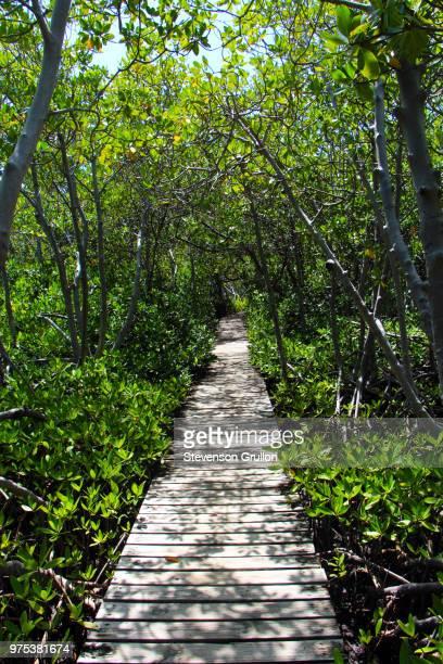 one way - paisajes de puerto rico fotografías e imágenes de stock