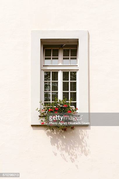 One white window with flower box & shadow