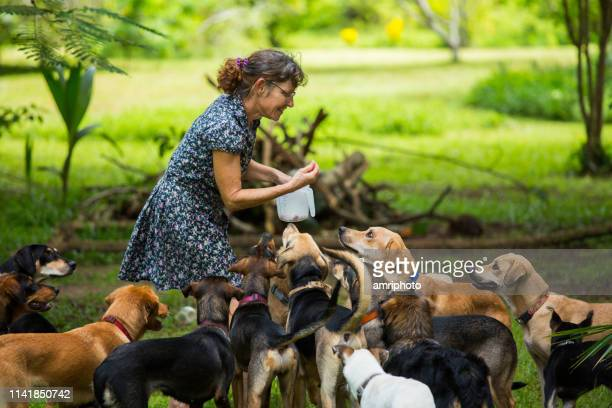 one woman with her many lovely dogs in her tropical garden - large group of animals stock pictures, royalty-free photos & images