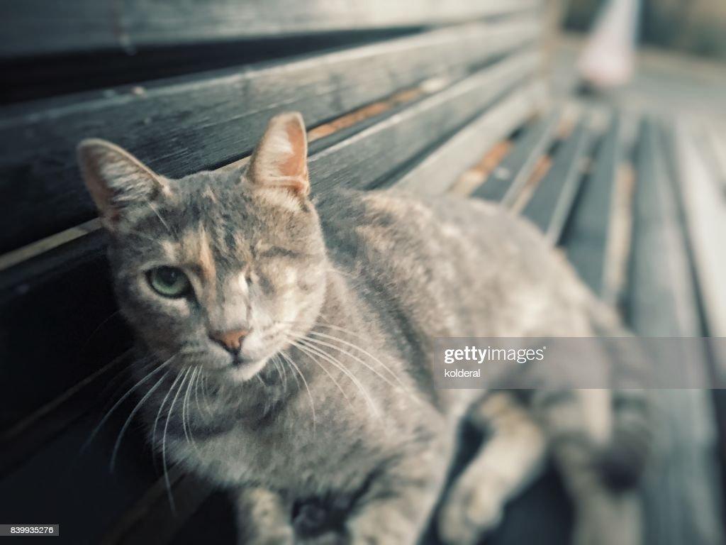 One-eyed cat : Stock Photo