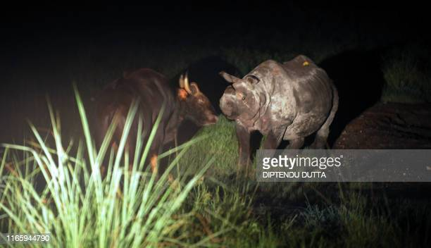A onehorned rhinoceros and an Indian Bison meet in a grassland area of The Jaldapara Wild Life Sanctuary some 130kms from Siliguri on July 5 2009 The...