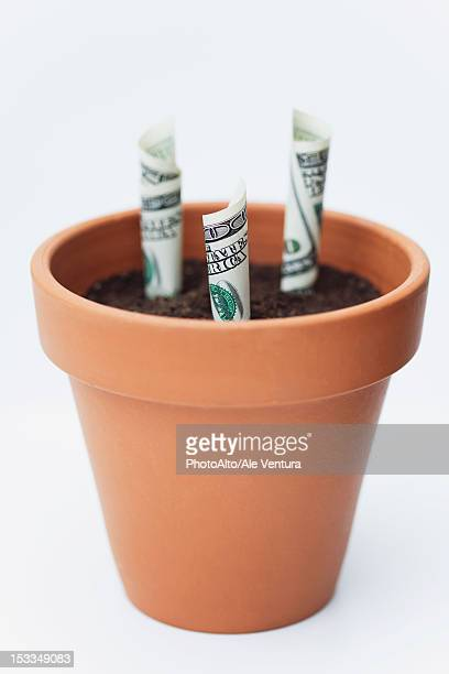 one-hundred dollar bills planted in flower pot - marijuana money stock photos and pictures