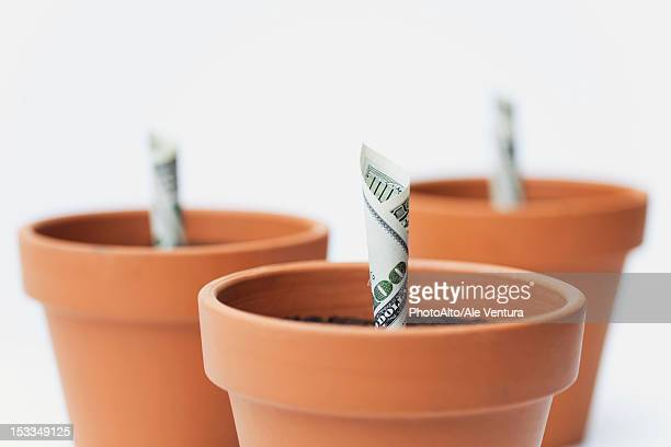 one-hundred dollar bills planted in flower pots - marijuana money stock photos and pictures
