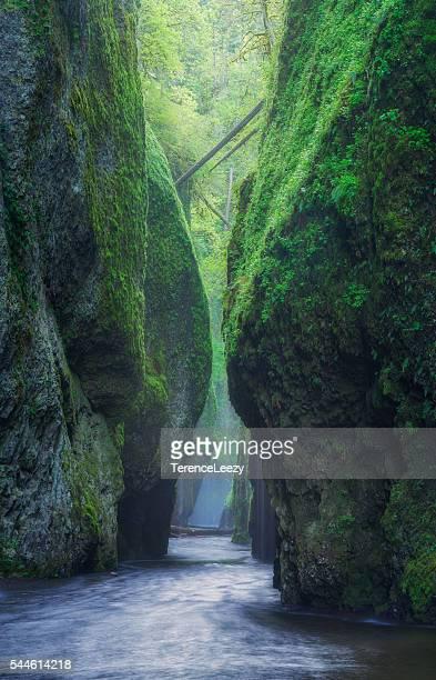 oneonta gorge, oregon - portland oregon stock pictures, royalty-free photos & images