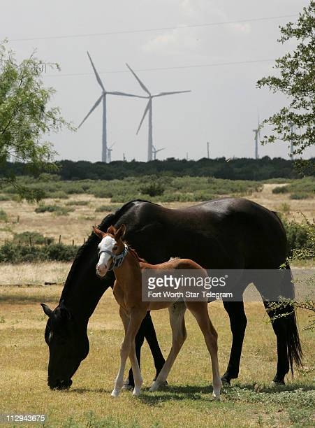 Oneweekold colt ToeClay feeds with her mother Billy Wayne on the Double Heart Ranch in Sweetwater Texas The wind turbines have been on the ranch for...