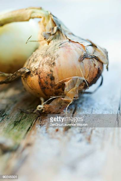 onion covered with dirt, close-up - blumenzwiebel stock-fotos und bilder