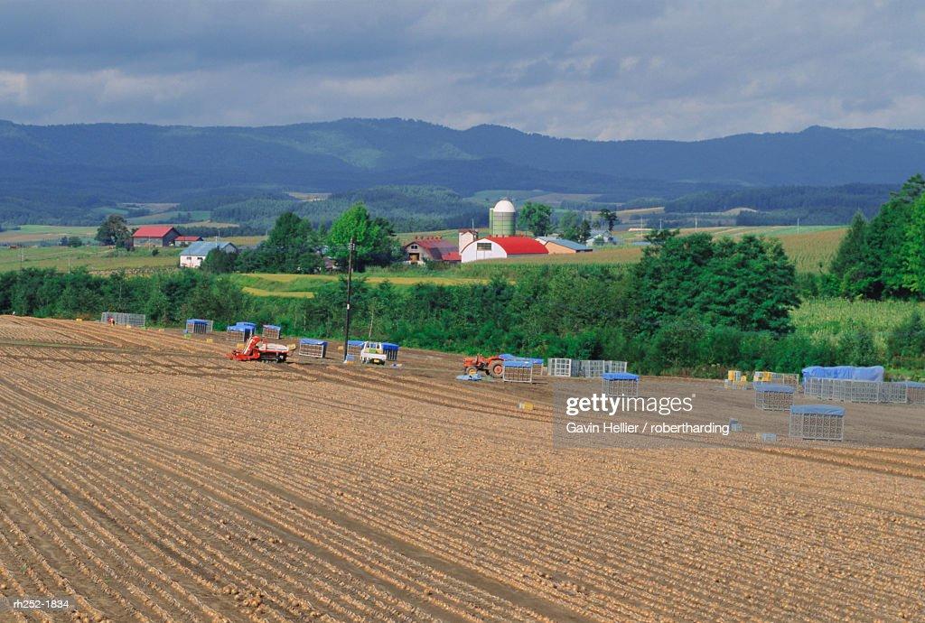 Onion fields near Furano, Hokkaido, Japan, Asia : Foto de stock