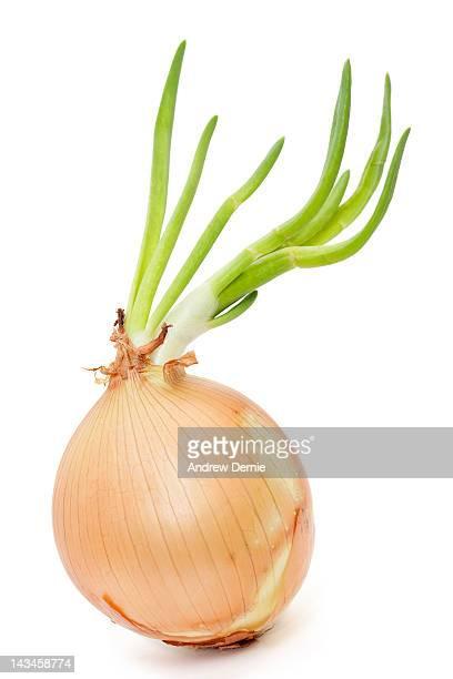 onion - andrew dernie stockfoto's en -beelden