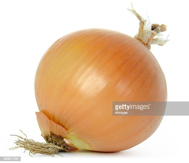 onion - onion stock pictures, royalty-free photos & images