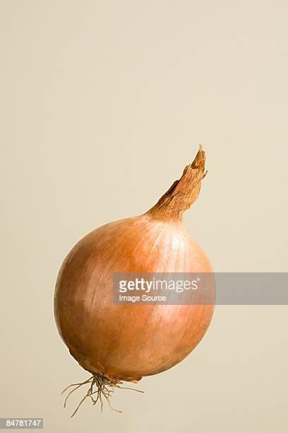 onion - cebolla fotografías e imágenes de stock
