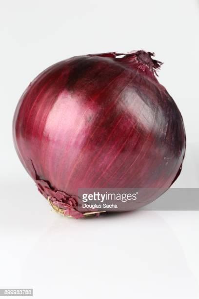 Onion (allium cepa)