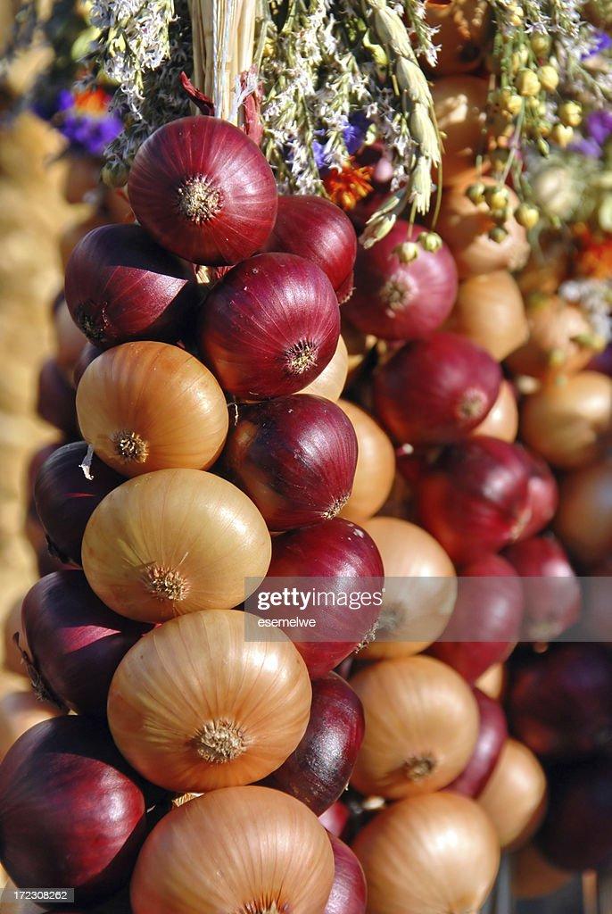 Onion plait : Stock Photo