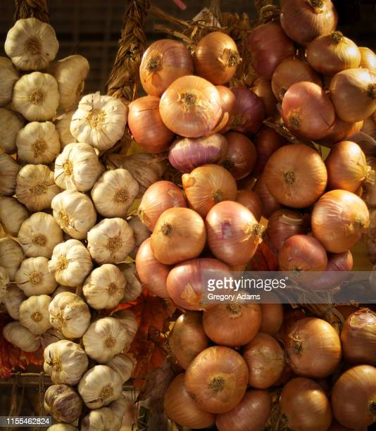 onions and garlic braids in a tuscan market - cabeza de ajos fotografías e imágenes de stock
