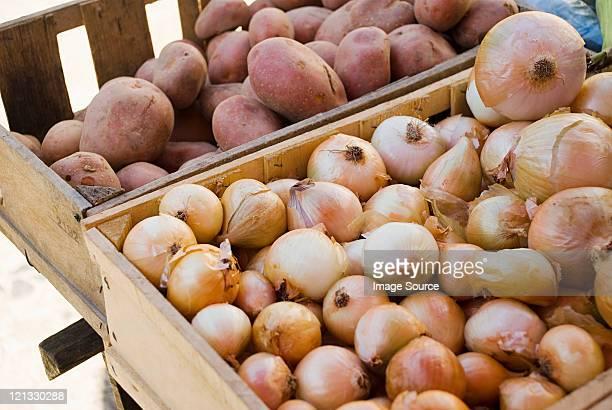 cebollas en las verduras y las papas individual - cebolla fotografías e imágenes de stock