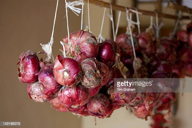 Onions stored at La Fornace Azienda Agricola at Montalcino in Val D'Orcia, Tuscany, Italy