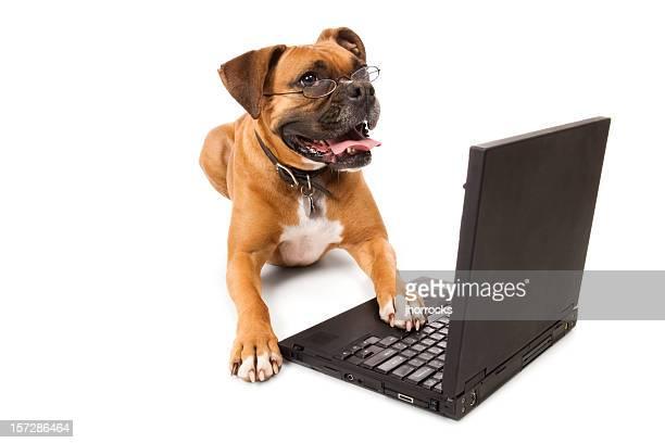 オンラインの犬-犬、ノートパソコン - 動物芸 ストックフォトと画像