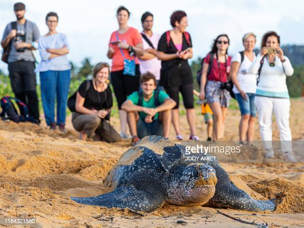 Onlookers observe a leatherback sea turtle also known as the Luth turtle laying eggs under the supervision of Kwata association members on a beach in...