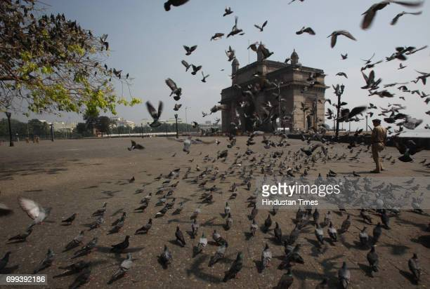 Only pigeons are allowed in this area near Hotel Taj Palace and Towers Everyone else including the gateway photographers or tourists is barred from...